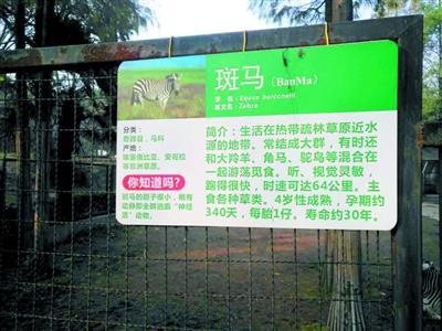 """通过本报给武汉动物园挂出多年的动物说明牌挑刺:像""""斑马胆子很小"""""""""""