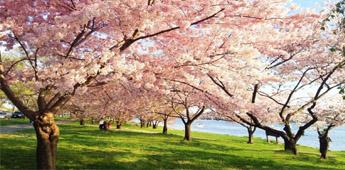 全世界十佳赏花圣地 中国居然位居榜首